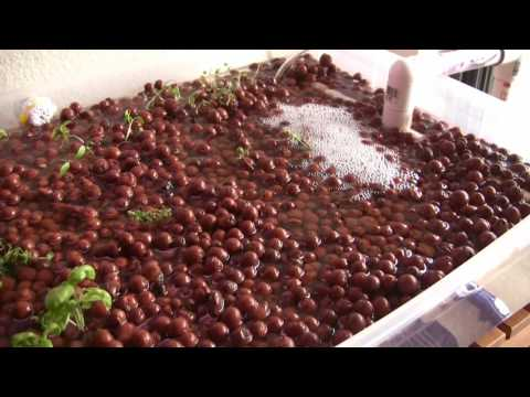 Apartment Aquaponics: Initial Setup (1/2)