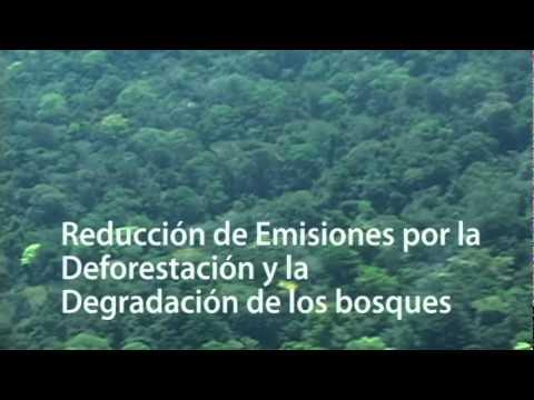 Trailer de 'REDD: la codicia por los árboles. El Caso Chiapas: la Selva Lacandona al mejor postor'