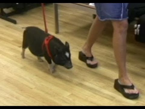 Pig Goes Shopping