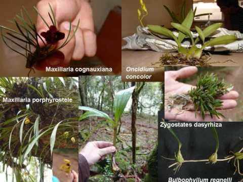 Biodiversidade ameaçada na Bacia do Rio Uruguai, Sul do Brasil