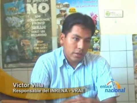 Redoblaran esfuerzos para proteger bosques nativos de los taladores ilegales en San Francisco, Ayacucho