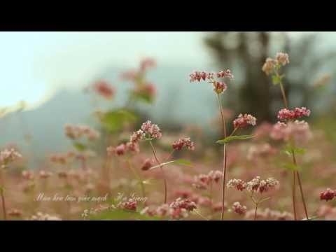 Vẻ đẹp hoa Tam Giác Mạch Hà Giang