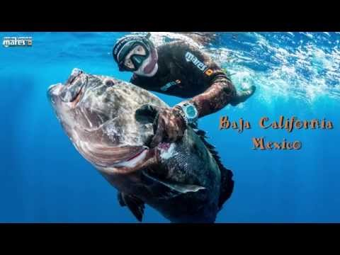 Joseba Kerejeta spearfishing pesca submarina Mar de gigantes Giant sea2 yutube