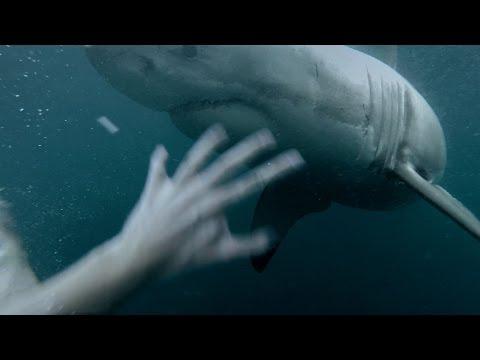 شاهد شاب يقفز في البحر فوجد سمكة القرش بإنتظاره