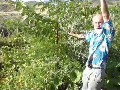 closed canopy organic gardening is food forest prep