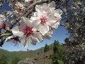 Teneriffa - Mandelblüten Rundwanderung auf Teneriffa