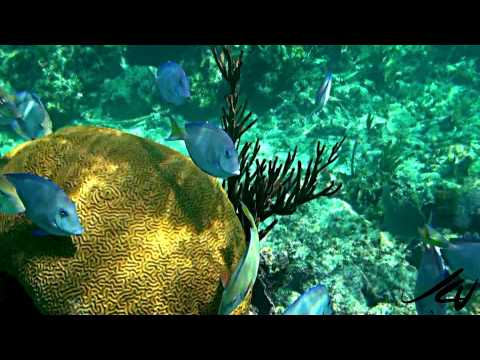 Fish at the Coral Reef - Mayan Riviera Sony HD