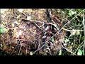 Фрагмент с середины видео ТАЙНА НОВОЙ ЛЕСНОЙ ЯМЫ ИЛИ В ПОИСКЕ ЗОЛОТА