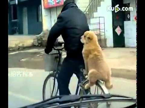 Un catel pe bicicleta