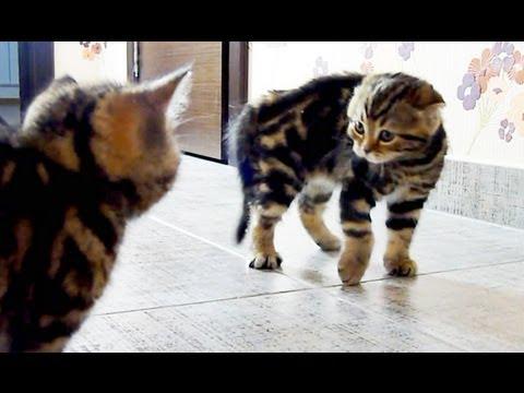 Những chú mèo đáng yêu – phần 2