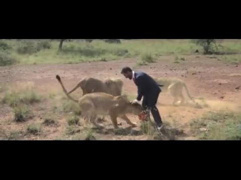 A crazy guy playing with a ball and 3 lions