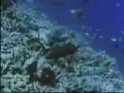 ECOSISTEMA DEL OCEANO