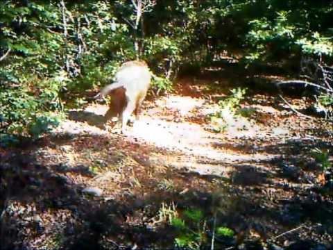 Fototrappolaggio nel Parco Nazionale delle Foreste Casentinesi