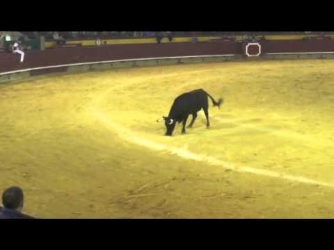 2015 03 13 QUINTA PAREJA  ANILLAS CASTELLON DAVID CHUS
