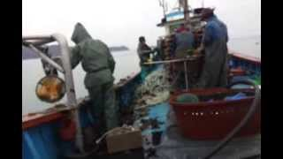 Fishery In South Korea
