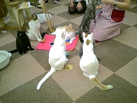 """A """"Cat Cafe"""" I went to in Tokyo"""