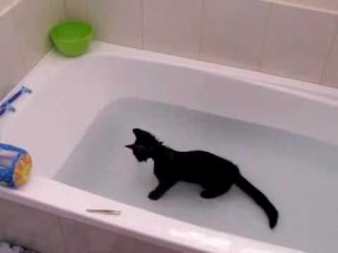 Ova mačka voli vodu