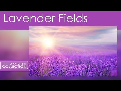 Flowers DVD: Lavender Scents  from the nature DVD Flowers of the Provence