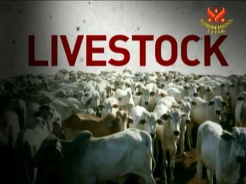 Emisiones del ganado - Los Hechos