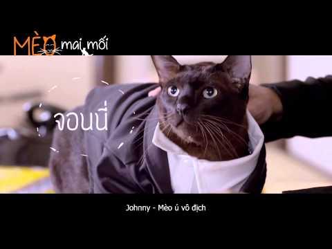 Mèo Mai Mối - Cat A Wabb
