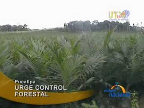 En Pucallpa, proponen normas legales para manejo forestal