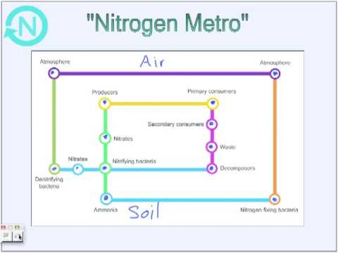 The Nitrogen Cycle by Angel and Shellana