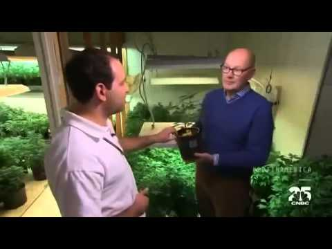 (Marijuana) in America Colorado Pot Rush Documentary 2014
