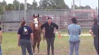 UCF Medicine and Horsemanship Course