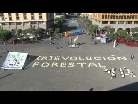 Llaman en Jalisco a la [R]evolucion forestal