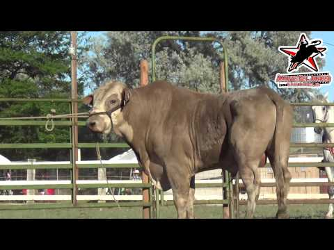 !BUEN JARIPEO! en THE DALLES OREGON (1080p HD)