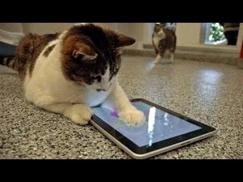 videos graciosos de sustos de gatos: