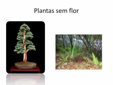 Reino vegetal.wmv
