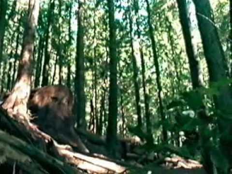 Kris Holm Freeride video