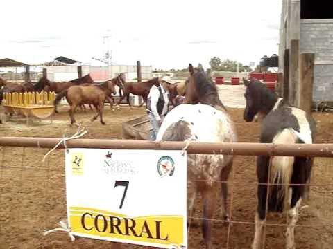 Corral 07