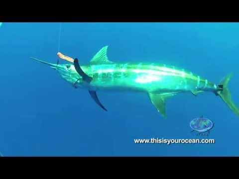 Shark gives diver the scare of a lifetime - great white shark face off
