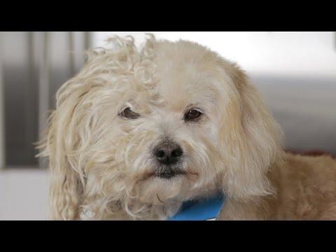 Homeless Dog Gets a Makeover that Saves his Life! - Tobey - UCPIvT-zcQl2H0vabdXJGcpg