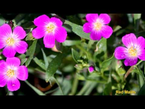 Wild Edible Plants Part 2 of 10