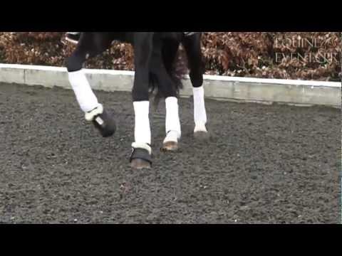 Slow Motion Horse HD Jumping Dressage