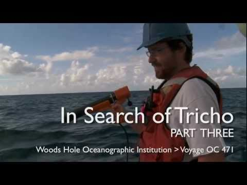 In Search of Tricho, Part 3