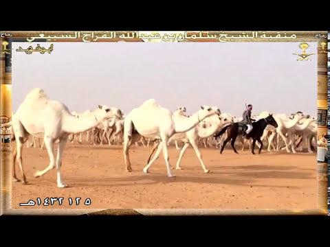 منقية الشيخ :سلمان بن عبدالله الفراج السبيعي 5-12-1432هـ.