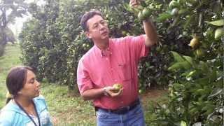 Agricultura Específica por Sitio - Cítricos - Valle del Cauca