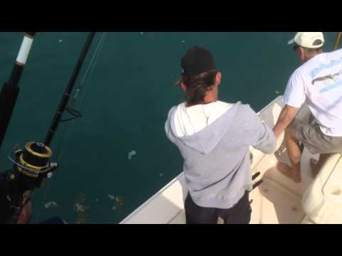 Cobia Fishing Off Port Canaveral