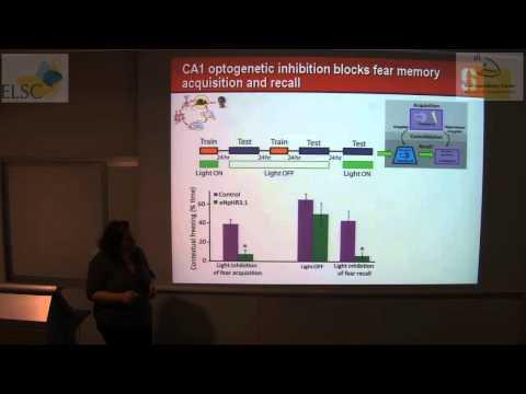 ELSC-ICNC Seminar - Inbal Goshen