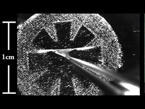 Caltech and Harvard Bioengineers Explain Artificial Jellyfish Research