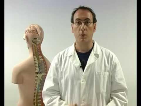 Il corpo umano (4/5) Il sistema nervoso