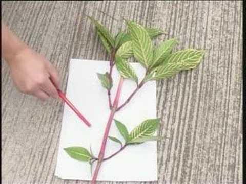 Plant Biology Part8