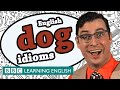 Dog Idioms - BBC Learning English (The Teacher)