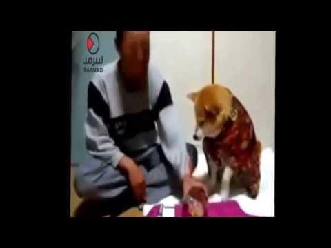 شاهد كلب يمنع صاحبه من شرب الخمر..فيديو
