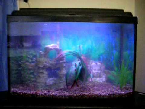 Fish Tank- Cycling 20 Gallon. Advice needed!