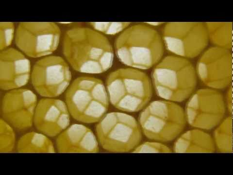 mudsongs.org: Architecture of Honey Comb
